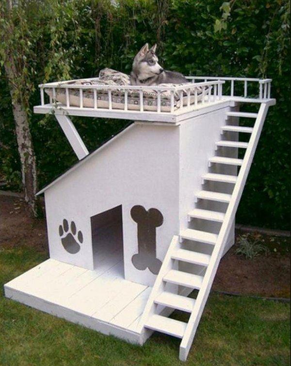 Emeletes kutyaház
